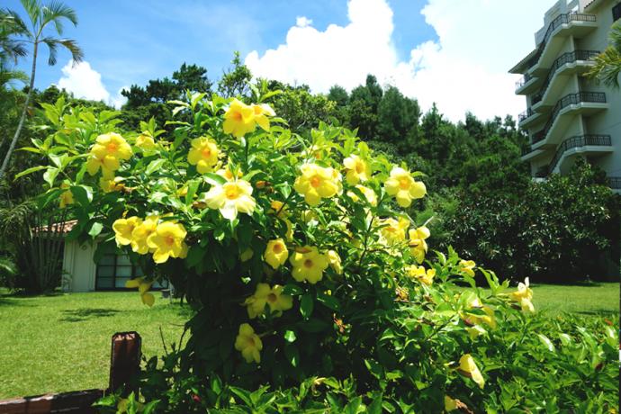 길가에 무심히 피어있는 꽃마저 힐링포인트가 된다.  - 김효정 에디터  제공